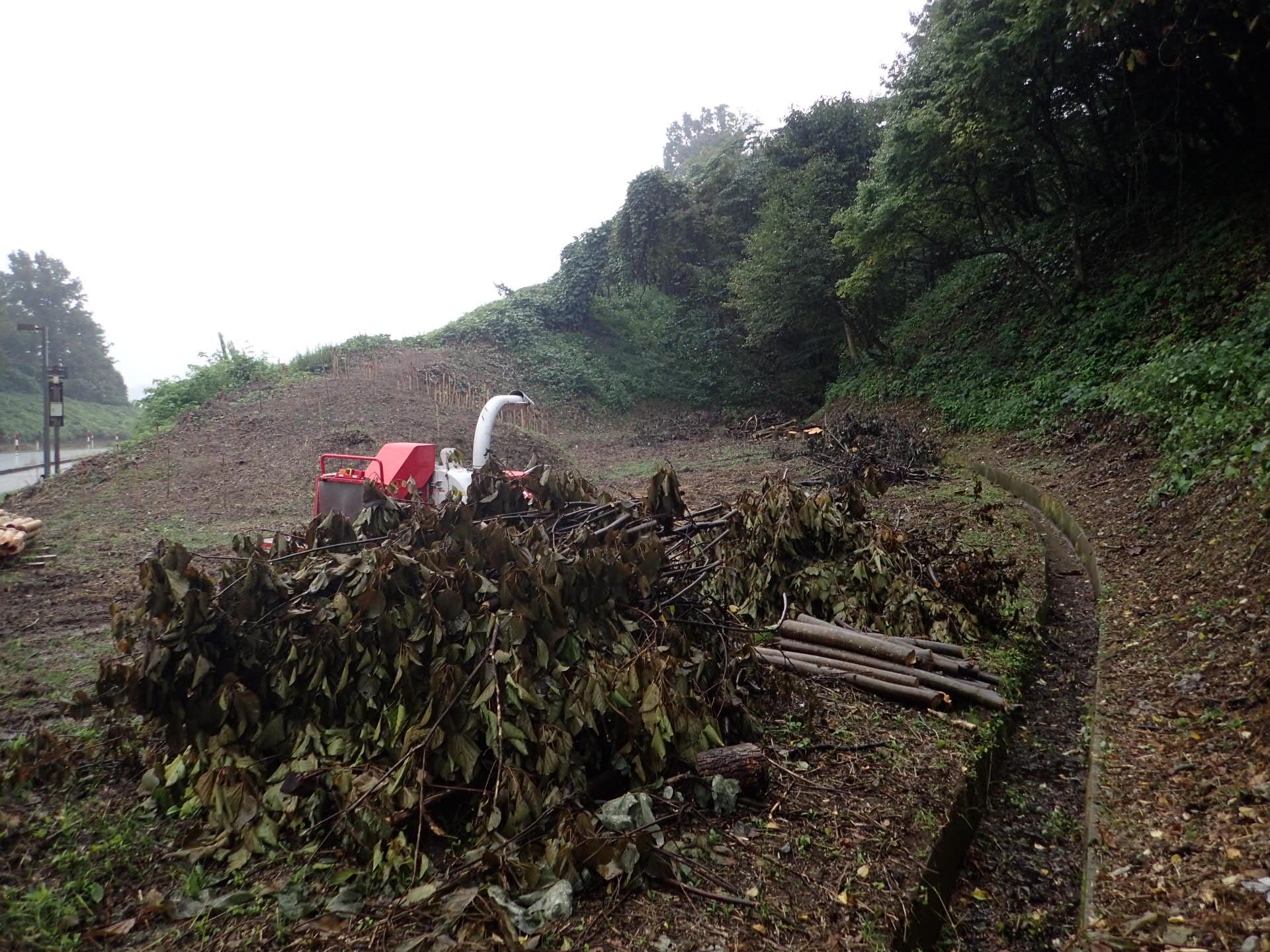金沢大学角間の里 伐採木処理作業