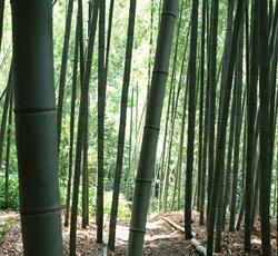 原材料は天然竹100%の土壌改良材